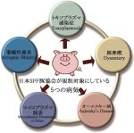 SPF豚とは品種名じゃなく、特定の病原体を持たない豚のコト
