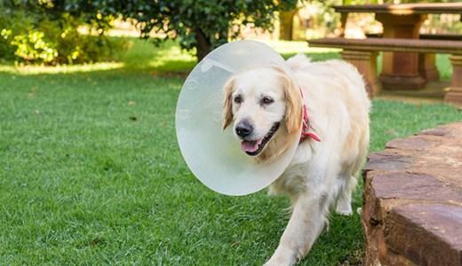 犬の整形外科?動物病院の事情 【獣医師が解説します。】