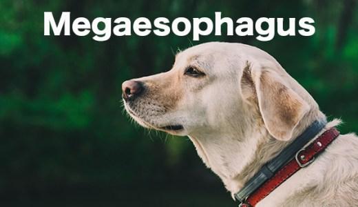 【犬の巨大食道症】食道が大きくなる病気。獣医師が解説します。