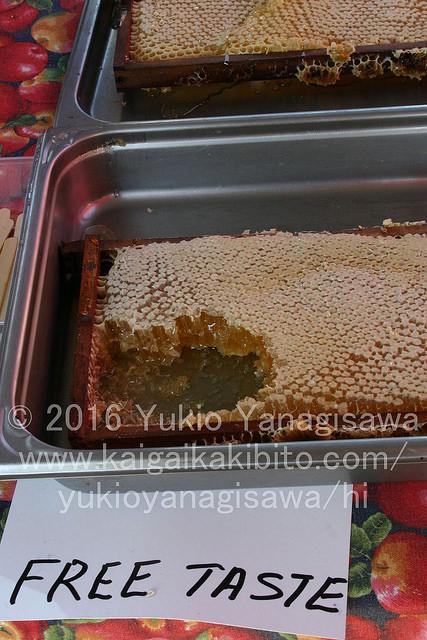 ハチミツの詰まった蜂の巣