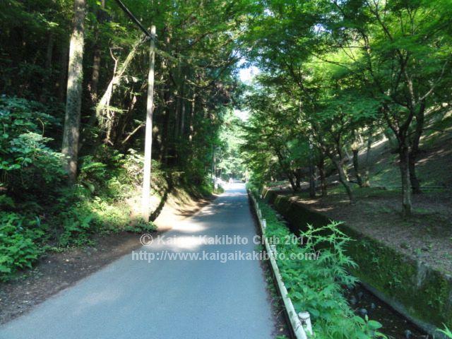 高尾山1号路スタート地点付近