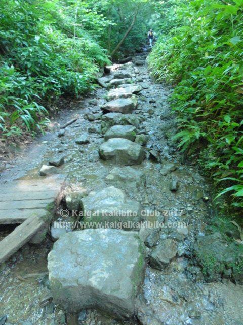 高尾山6号路 飛び石