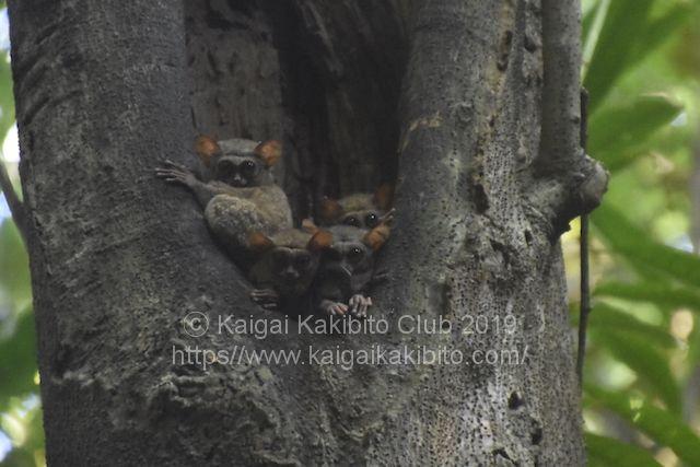 インドネシアのタンココ国立公園