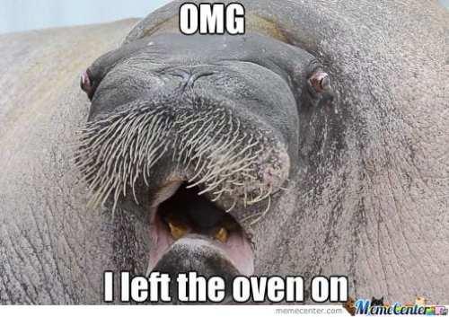 forgetful walrus