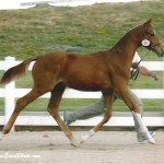 Awentia - 2005 Reserve Filly Champion as a Weaning