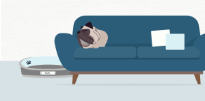 Gus the Pug snoozing on the couch