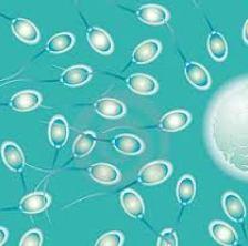 Khasiat di Balik Cairan Sperma