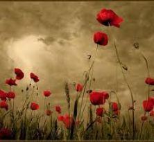 Indahnya Bunga Mawar Dalam Relung Jiwa