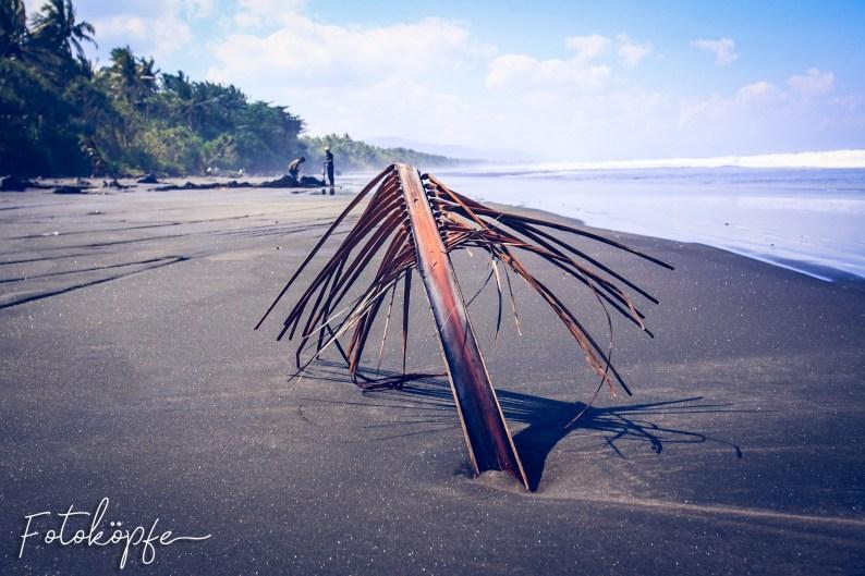 Kelapa Beach @ Bali