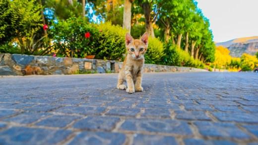 Süßer Fratz auf Kreta