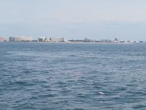 東京ディズニーシー沖海洋散骨
