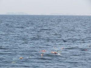 神奈川県の海洋散骨