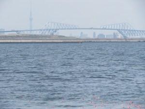 東京ゲートブリッジ沖散骨