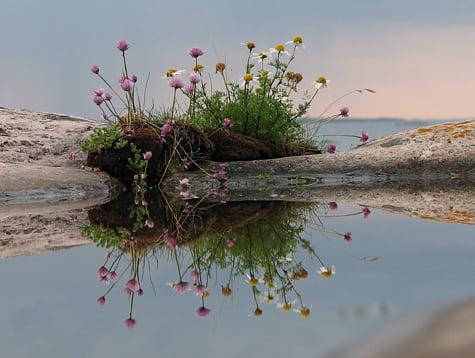 Fin spegling av fin blomma
