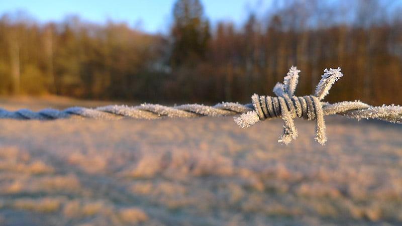 Taggtråd med lite frost