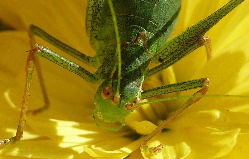 Och konstiga gröna insekter