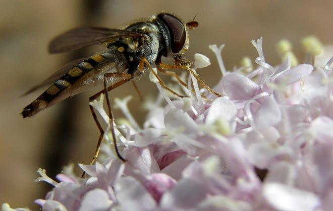 Insekterna kommer inte heller undan... Skaplig närgräns på Pias nya kamera