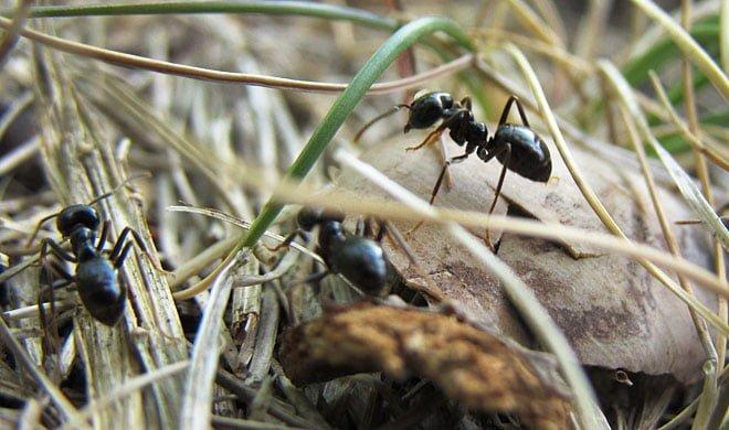 Pia letar myror med nya långzoomaren