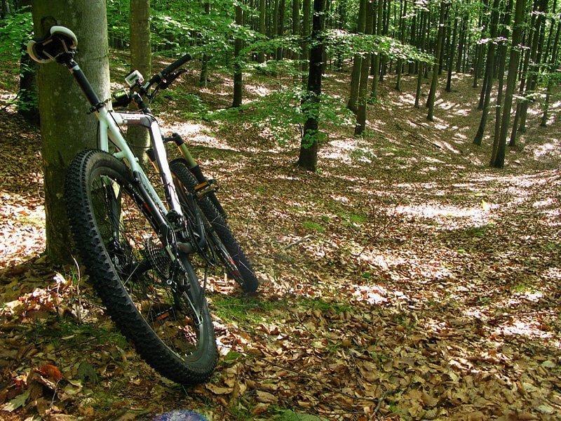 Mountainbike i fin bokskog