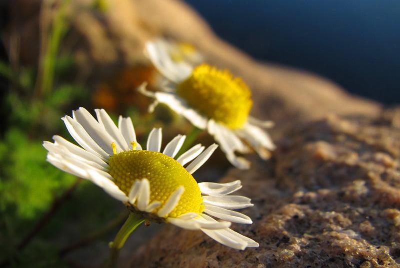 Blommar lite här och där