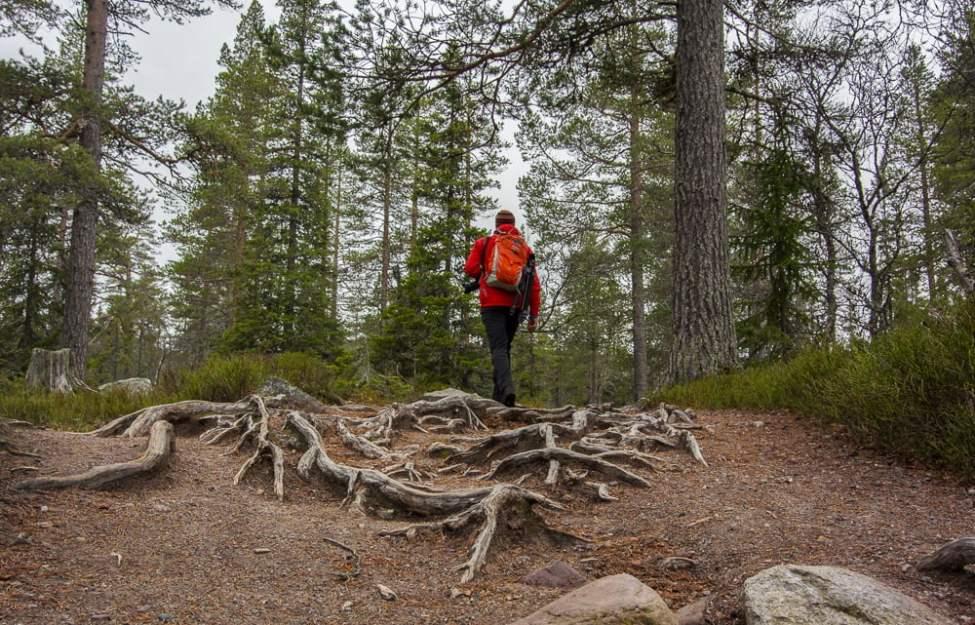 Fin promenad upp till Njupeskär
