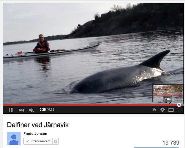 Delfiner i Järnavik