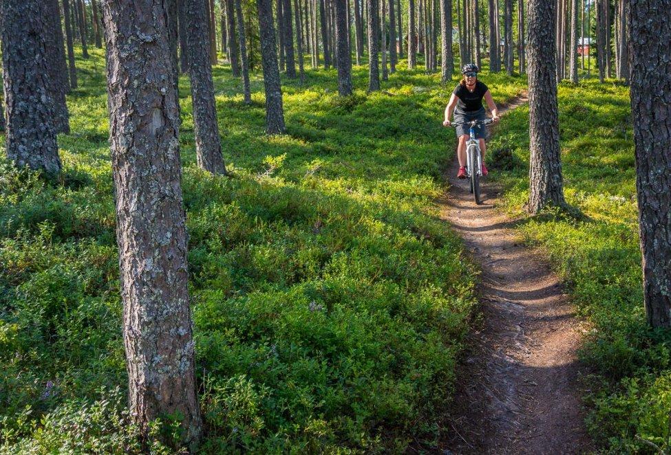 Superfin stigcykling i gles skog. Underbart ställe att cykla på!