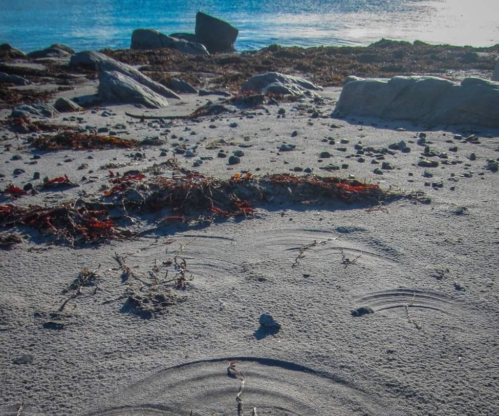 Tången som blåser hit och dit skapar fina mönster i sanden