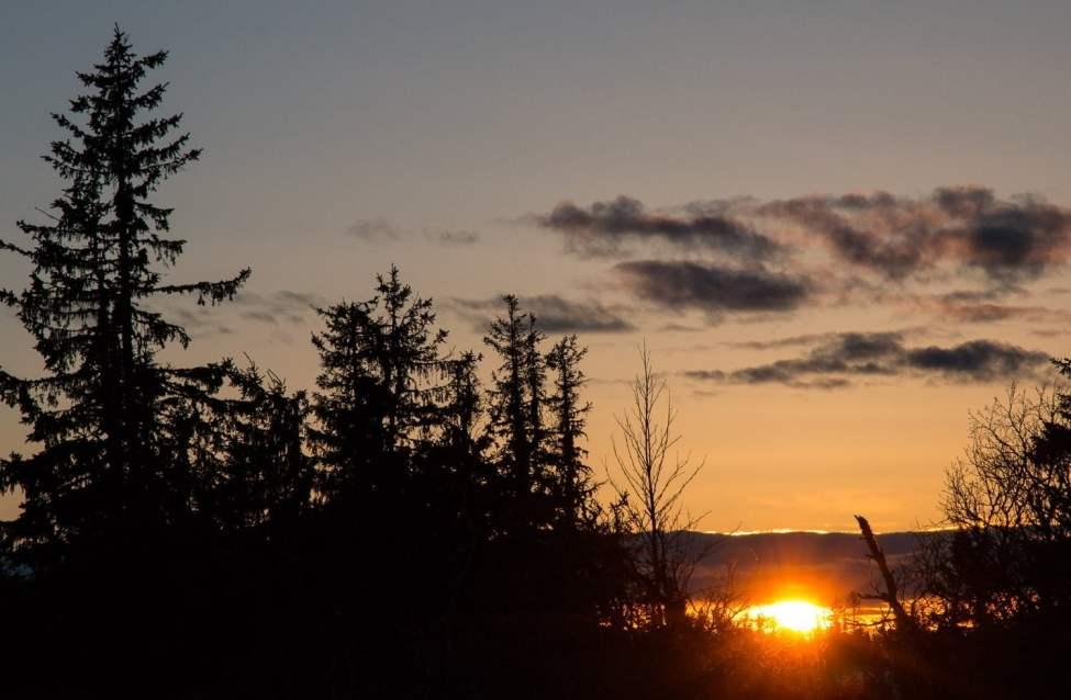 Solnedgång bland granarna strax nedanför Kalfjället