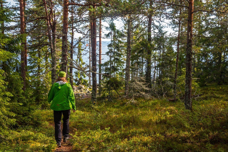Gröngrön promenad i Rotsidan naturreservat