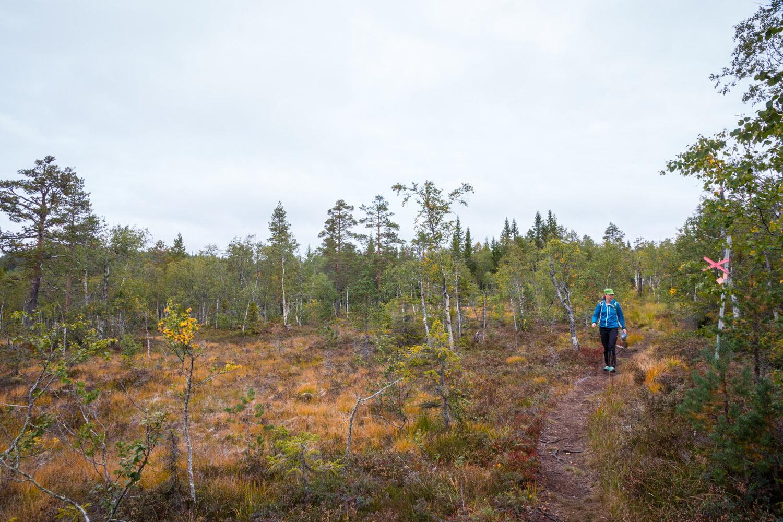 Lite fjällika miljöer på väg upp/ned från Granberget
