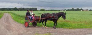 Här kör vi Hugo, som numera faktiskt jobbar heltid som körhäst, strax efter han hade blivit inkörd.