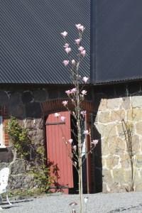 trädgård och Xipo 004