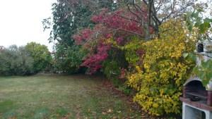 Höstfärger i trädgården