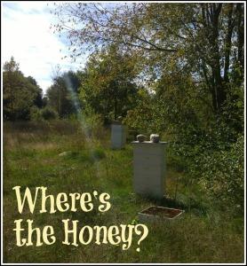 honey title