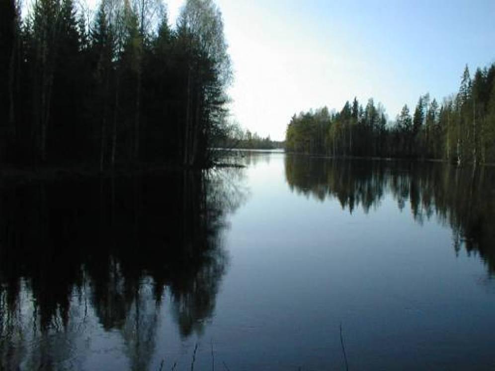 kuva2 Kuva Mieskosken niskalta ylävirtaan, Koirasyvän alapuoliseen suvantoon.
