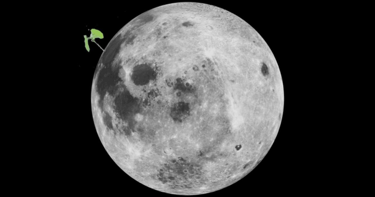 Снимка: Не оцеля първото израснало на Луната растение