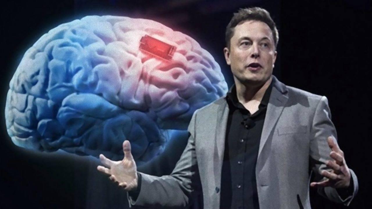 Мъск показа успешната имплантация на чиповете Neuralink в мозъка на две  прасета - kaldata.com