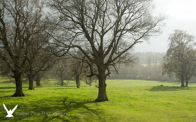 View from Dissington Hall - lovely light (even if it is raining)