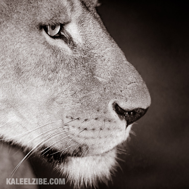 20150820-_D8E9559-KaleelZibe.com