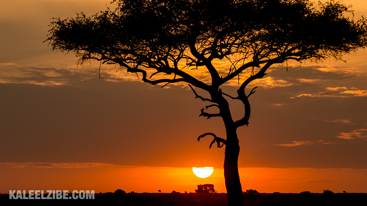 Sunsets in the Mara are awesome, not least because of the trees