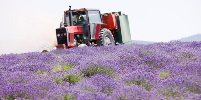 聖瑪麗薰衣草農場與蒸餾廠 — 美國愛達荷州聖瑪麗斯