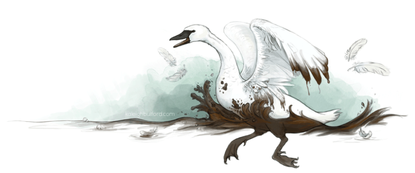 Trumpeter Swan illustration by Kaleigh Bulford