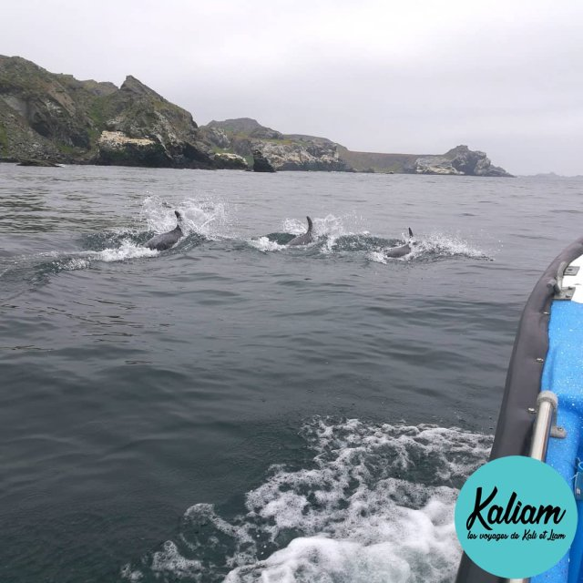 An unexpected Dolphins tribe came across our boat Une visitehellip