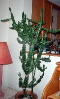 cactus2JPG.jpg