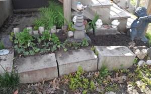 watercress garden
