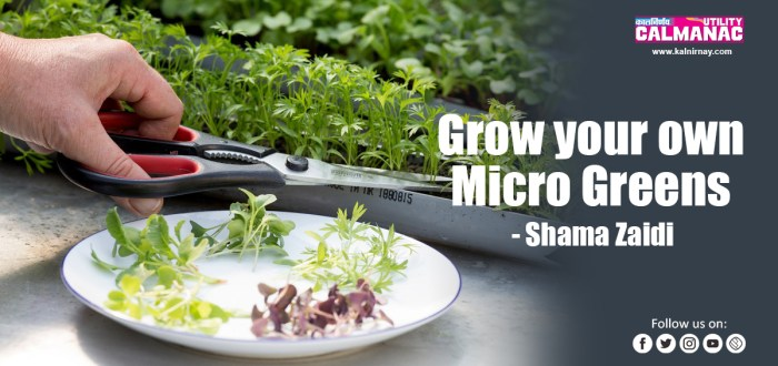 Microgreens | growing microgreens at home | microgreens list | growing microgreens | grow microgreens at home | organic microgreens | microgreens at home