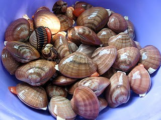 Steamed Clams in a Spicy Tomato Broth