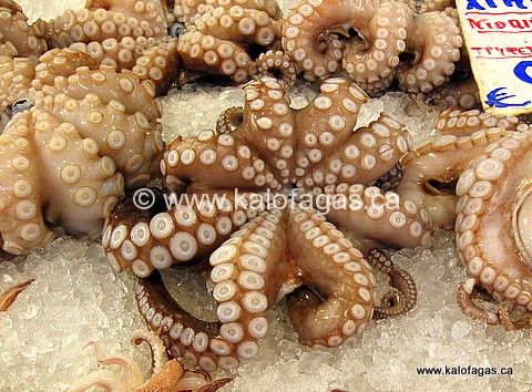 "Octopus Salad ""Mosaic"" (Χταπόδι-σαλάτα-Μωσαϊκό)"