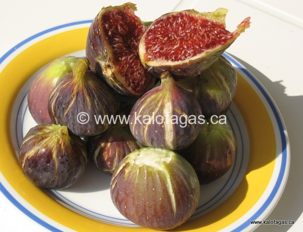 Fig Jam (Μαρμελάδα σύκο)